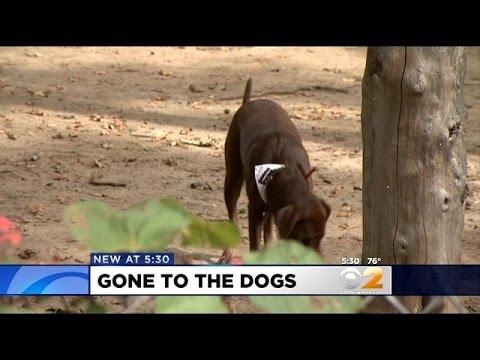 Some Say Dog Park At Historical Van Cortlandt Park Site Is Disrespectful