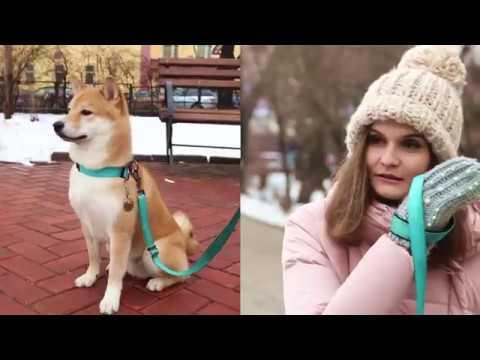 Dog Chow - Гаф-патруль с Голди