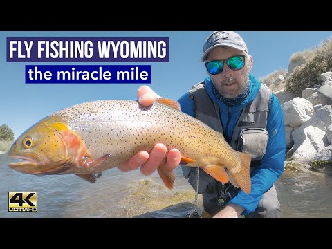 FLY FISHING WYOMING: Wade Fishing The Miracle Mile (a 4k Fly Fishing Video)