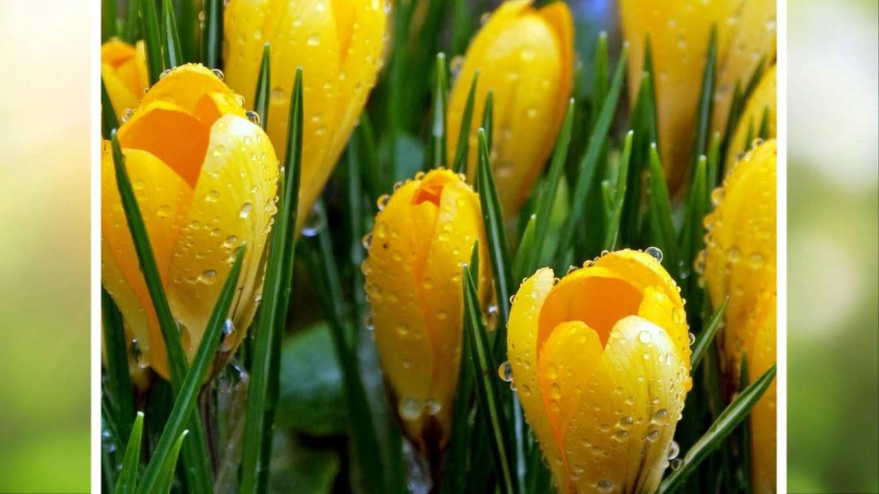 Первые весенние цветы - YouTube