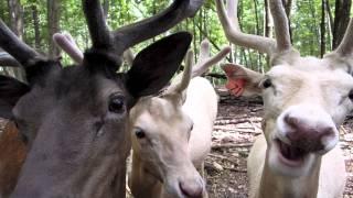 Briarwood Safari Park
