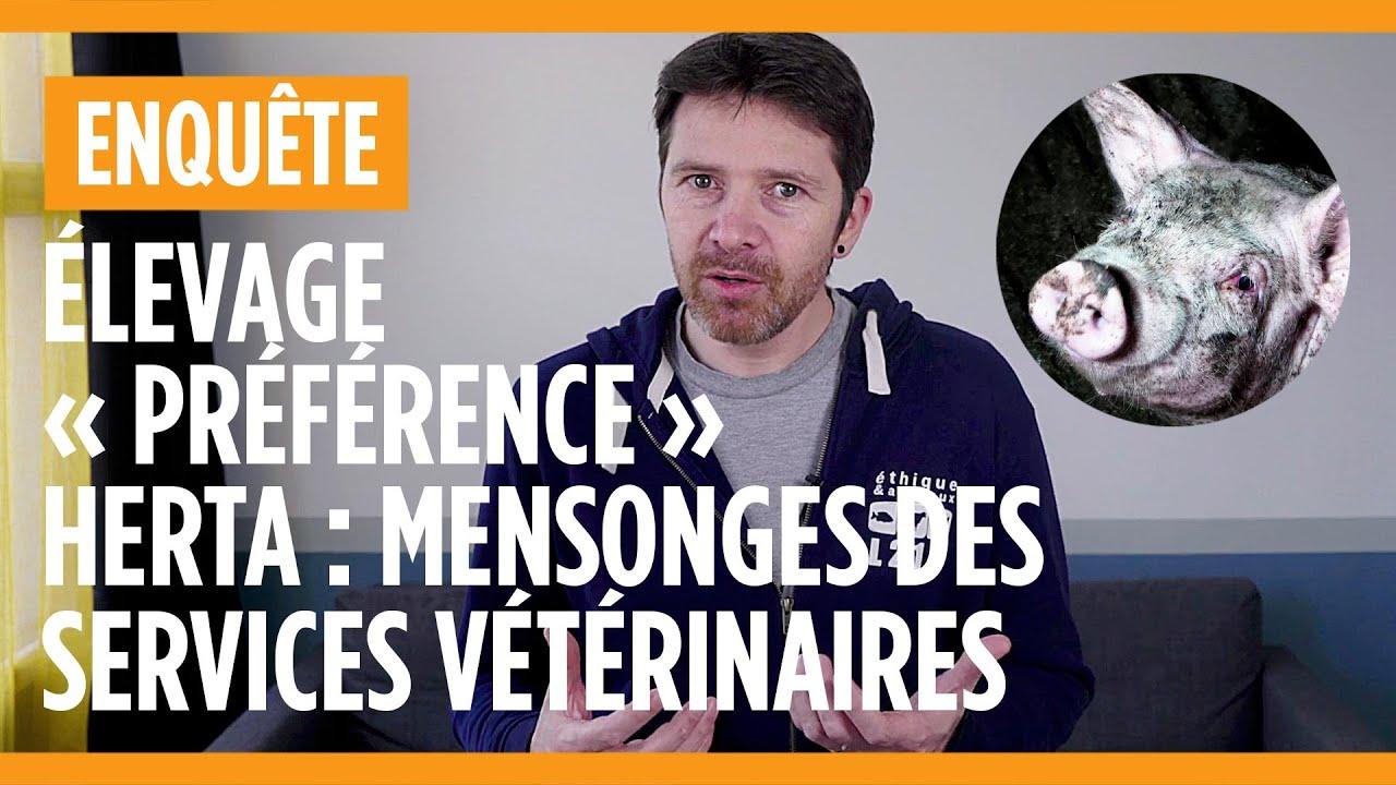 """Elevage de cochons """"Préférence"""" Herta - Les mensonges des services vétérinaires"""