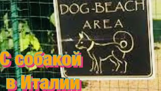 С собакой на озере Гарда в Италии//Путешествие с собакой