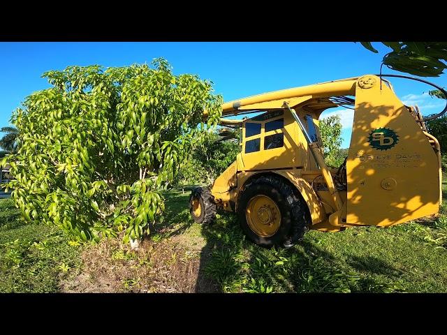Nick's Island Tropical Fruit Orchard Maintenance