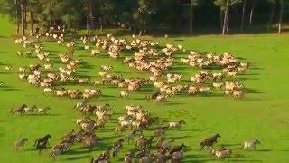 Красивое видео о природе и лошадях(, 2015-01-31T14:02:40.000Z)