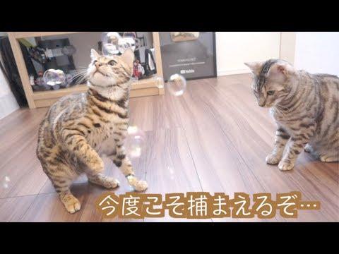 初めてシャボン玉を見た猫たちの反応の違いがすごい。。。