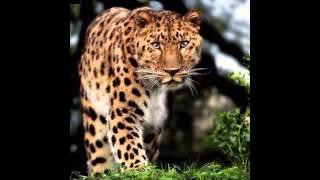 мимими-красота-животных