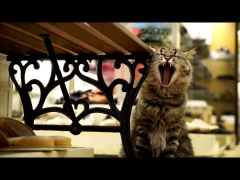 広島 CAT STREET VIEW / Hiroshima Cat Street View – Concept Movie