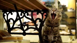 広島 CAT STREET VIEW / Hiroshima Cat Street View - Concept Movie