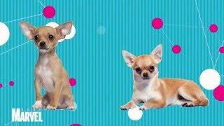 Почему собаки дрожат