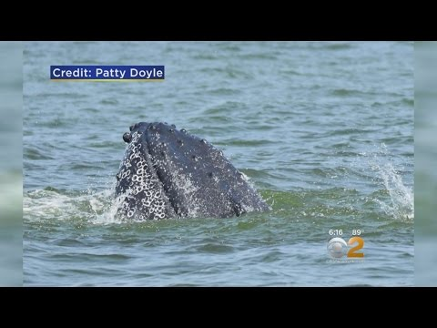 Long Island Sound Whale Watching