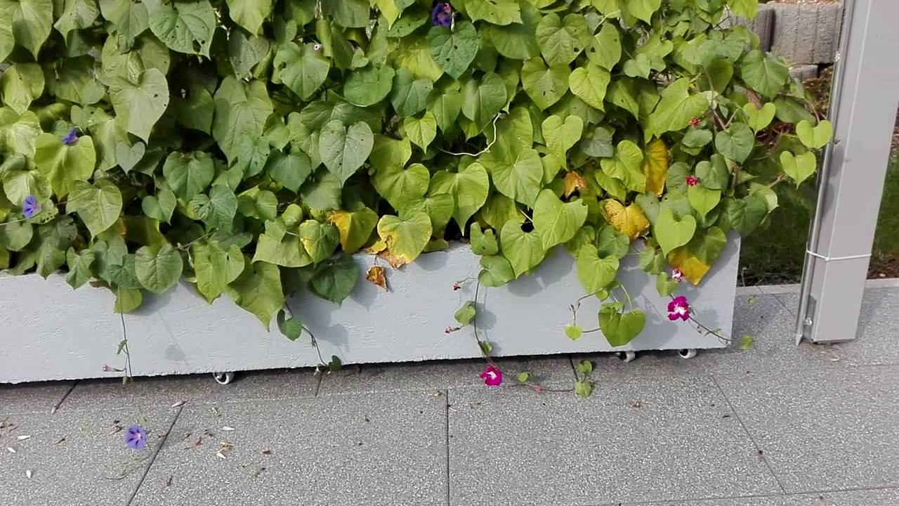 Mobiler Sichtschutz Garten Test 2020 Die Top 7 Im Vergleich