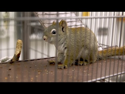 Cute Baby Squirrels Get a Flea Treatment