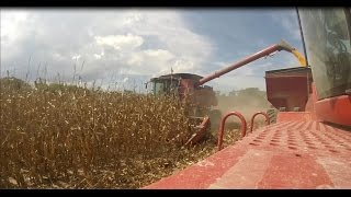 Case IH 8230 | Corn Harvest 2016 | J-Farms