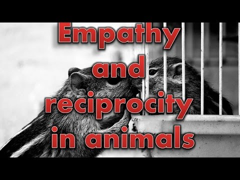 Empathy and reciprocity in animals