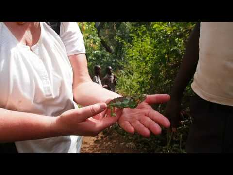P1210744   Kameleon bij Sipi Falls