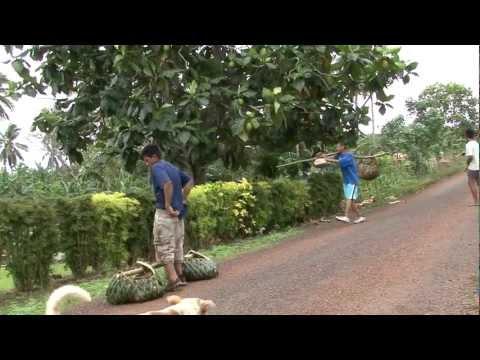 Teenagers at Work in Samoa