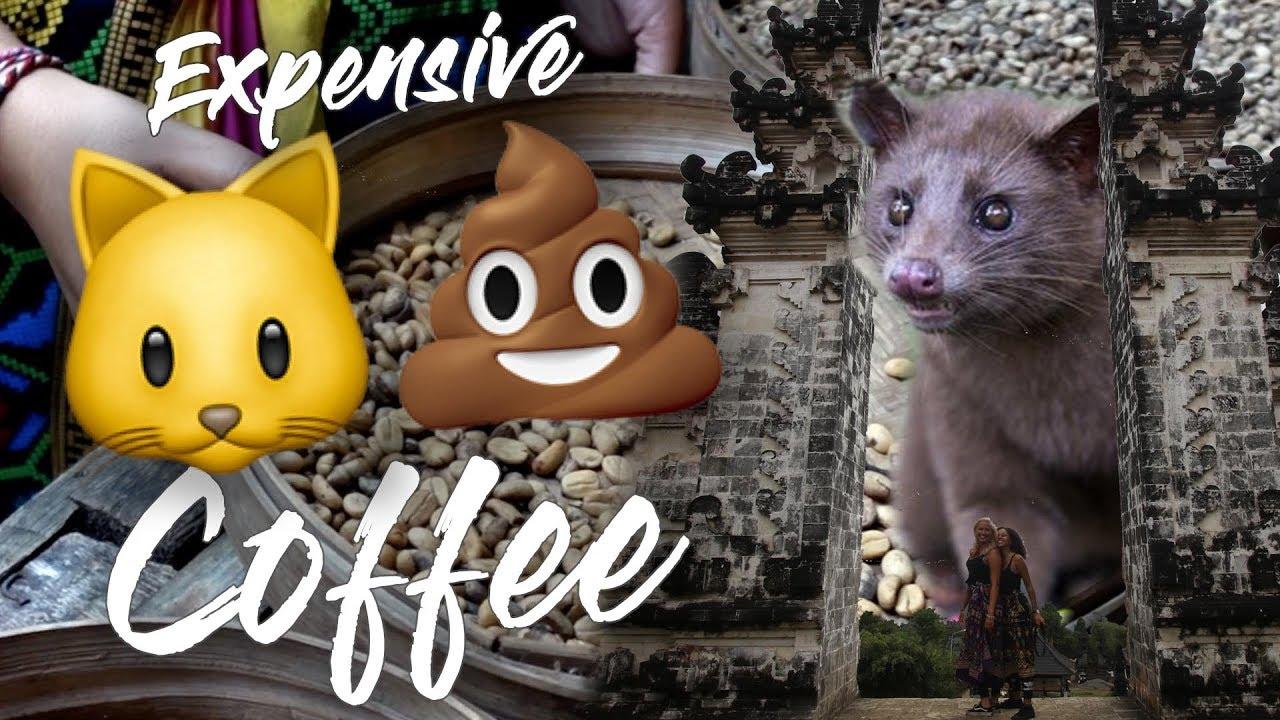 Kopi Luwak Coffee Experience   BALI