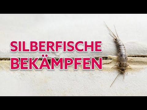 Silberfische Bekampfen Mit Einer Silberfischfalle So Kann