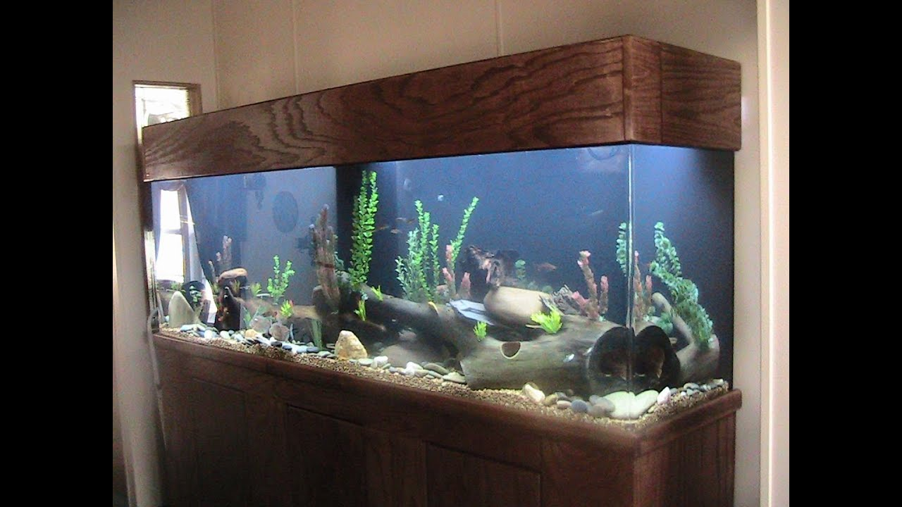 275 gallon acrylic aquarium setup cost and review plus for How to keep fish tank clean without changing water