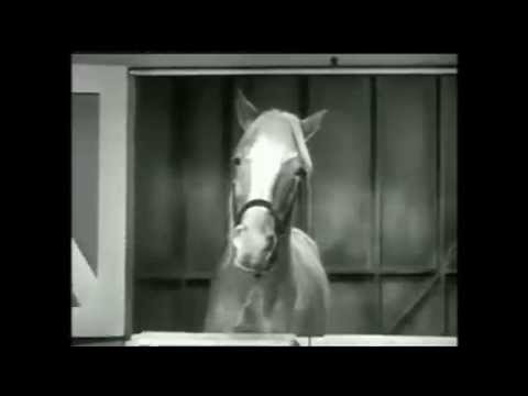Mr. Ed Show Opening and Theme Song The Good Old Days Part 21