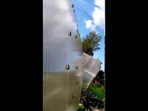 Летучие муравьи встают на крыло