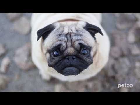 Affordable Pet Care (Petco)
