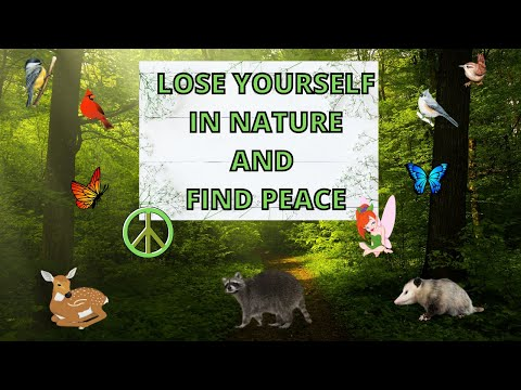Cedariver ~ -Trustees of Reservation ~ Millis Massachusetts ~ Lose yourself in nature and find peace