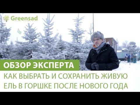 Новогодняя елка из гофрированной бумаги - YouTube
