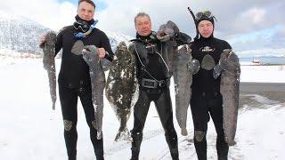 ПОДВОДНАЯ ОХОТА В НОРВЕГИИ!!!! ПАЛТУС!!! SPEARFISHING NORWAYhttp://wild-fishing-norway.ru/