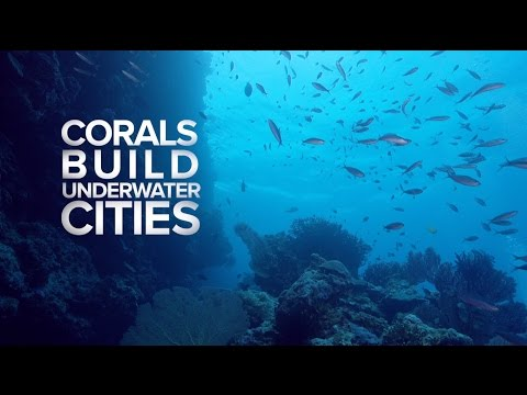 50 Reefs Launch Video
