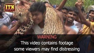 Villagers in Kilinochchi kill leopard after it attacks 10 people_21062018_ITN NEWS