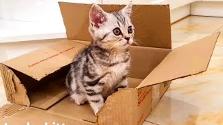Funniest Animals  Best Of The 2021 Funny Cats Videos #1