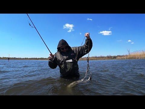 Рыбалка ВЗАБРОД на крокодила! Сейчас рыба такая сильная, что руки устают.  Карантин продолжается.