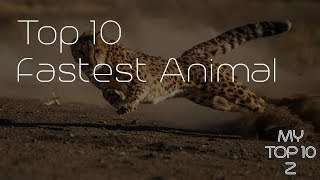 Top 10 Fastest Animals | MyTop10z
