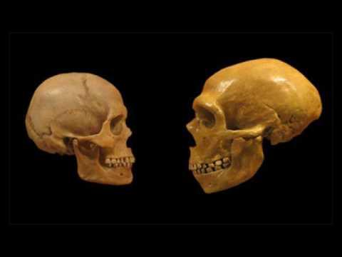 Эволюция человека (рассказывает палеонтолог Александр Марков и др.)