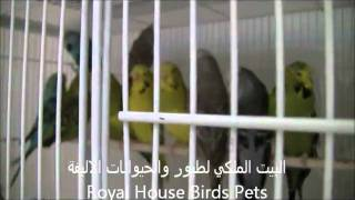 Royal House Birds Pets