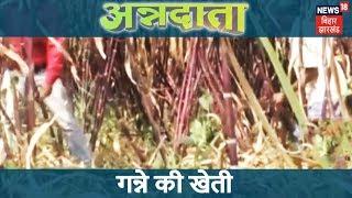 गन्ने की खेती में किसानों की सफलता की कहानी | ANNADATA