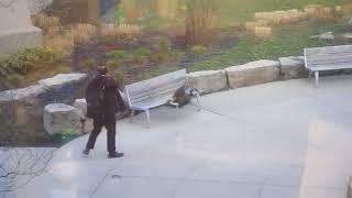 Приколы гуси атакуют