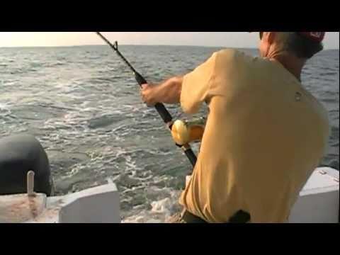 NEW! Massive Tiger Shark Caught On Tape - Hilton Head Island Shark Fishing - Outcast Sport Fishing