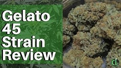 Gelato 45 Strain Review | Cannabis Lifestyle TV