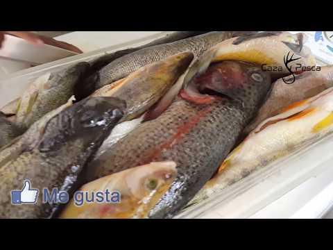 Pesca Y Cocina | Caza Y Pesca