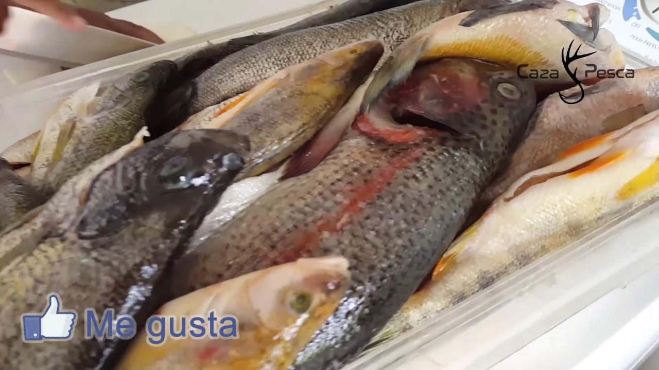pesca-y-cocina-en-disco-de-arado-caza-y-pesca
