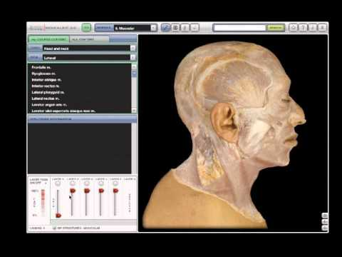 Anatomy & Physiology | REVEALED: Dissection - YouTube
