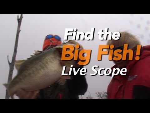 How To Locate And Catch GIANT BASS! Guaranteed-Garmin Live Scope #GarminHuntFish