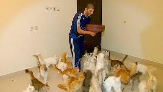 Житель Саудовской Аравии устроил в квартире приют для кошек (новости)