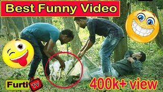 funny dog compilation