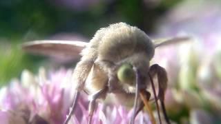 видео Как вывести моль в квартире: похожи насекомые