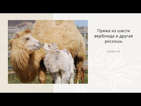 Пряжа из шерсти верблюда и другая роскошь