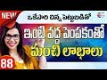 How To Start a Profitable Rabbit Farming  at home |small business ideas | in telugu -88